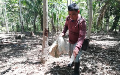 More rubber farmers in Zamboanga reached in innovated project scheme