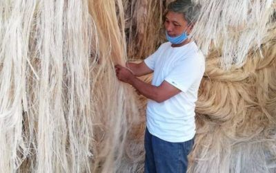 SORTED ABACA FIBER AT THE TEMPORARY WAREHOUSE