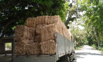 6.5 METRIC TONS ABACA FIBER DELIVERY OF NAGPAKABANA MULTI-PURPOSE COOPERATIVE